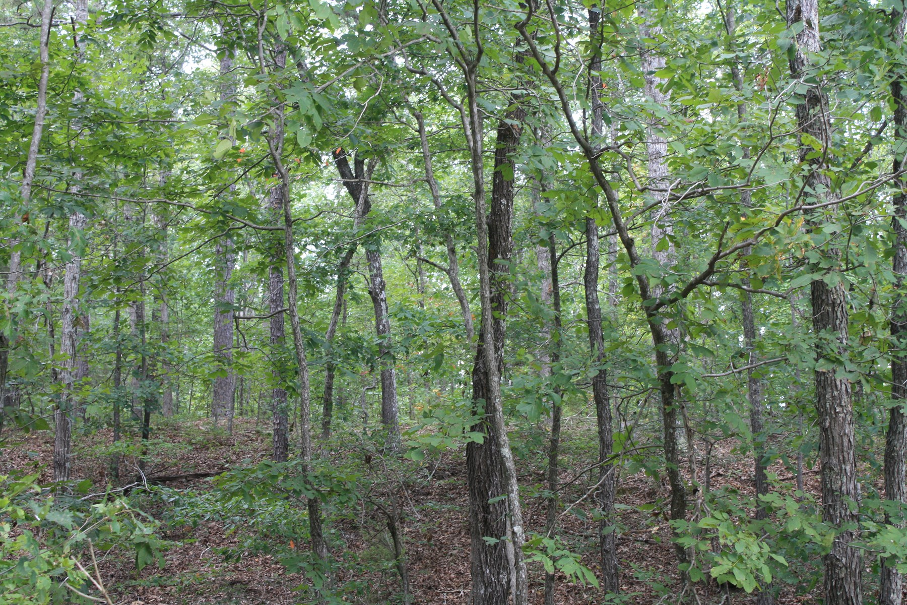 Wayne County Missouri land for sale 258.5 Acres