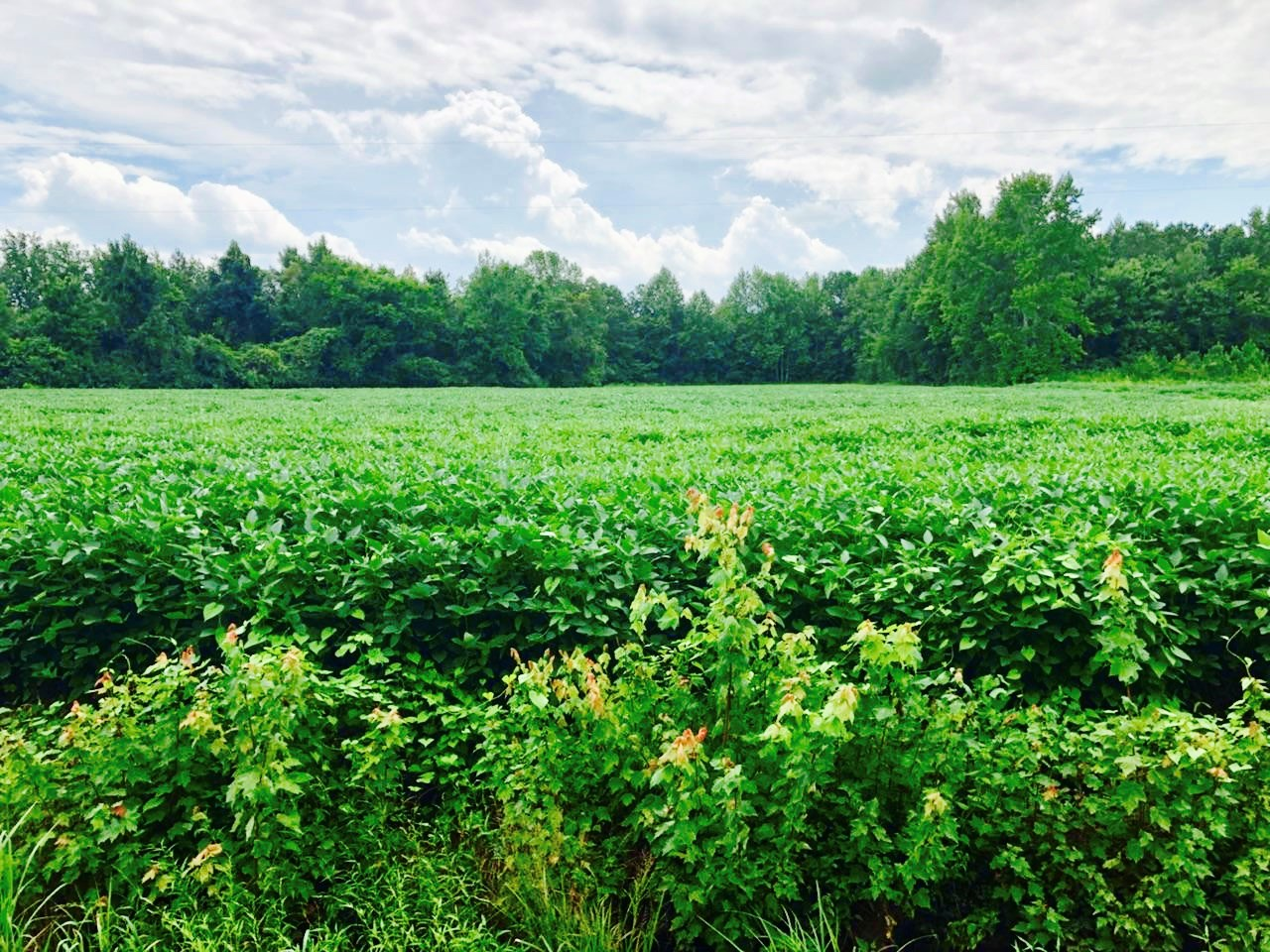 Timberland/Farmland for Sale in Washington County, NC