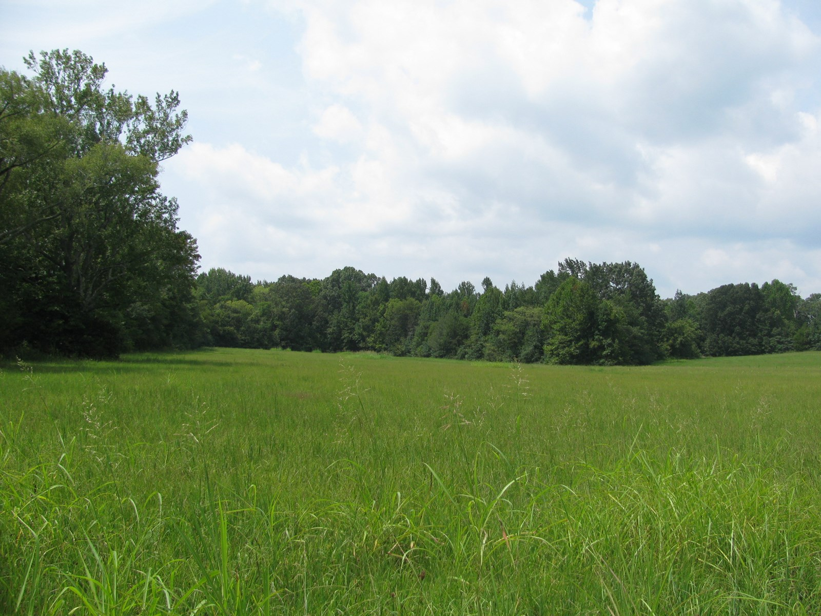 LAND FOR SALE ON HWY IN ADAMSVILLE, TN