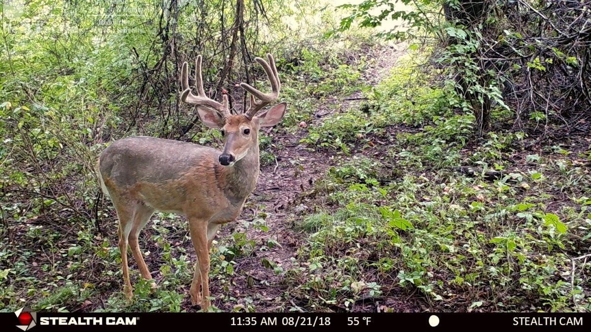 Premium Hunting Property For Sale in Southwestern Wisconsin