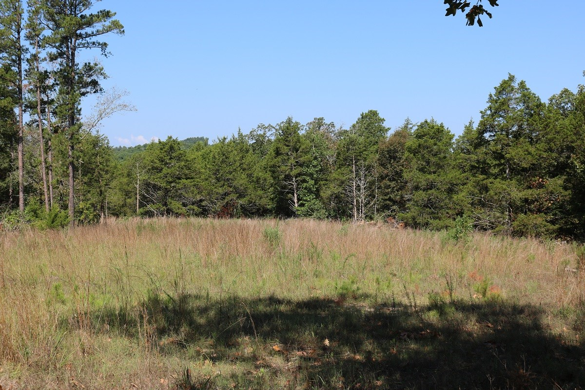 RAW HUNTING LAND FOR SALE IN ARKANSAS