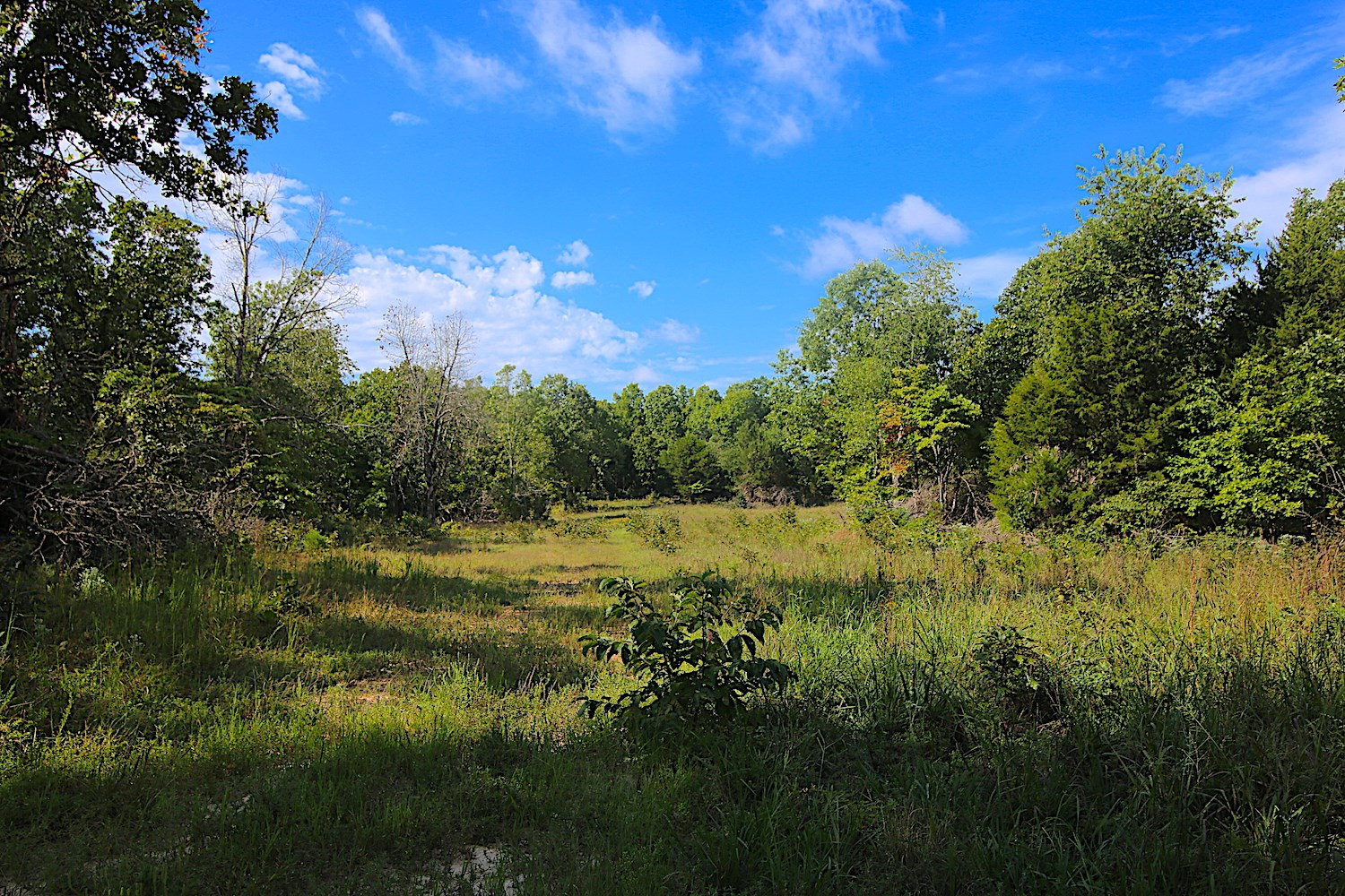 Arkansas Hunting Property for Sale in Randolph County