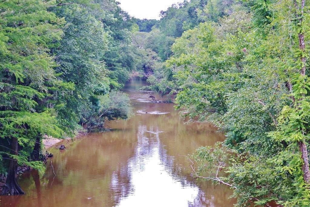 Waterfront Timber Land for Sale Wayne County, MS