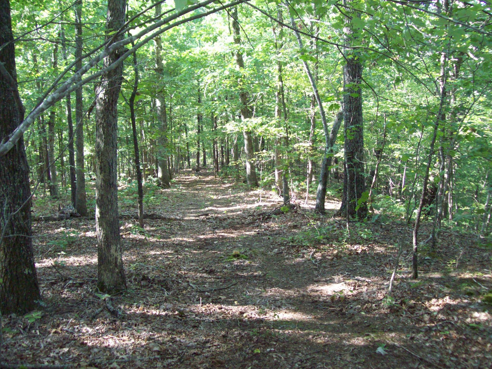 20 +/-Acres Timber Property