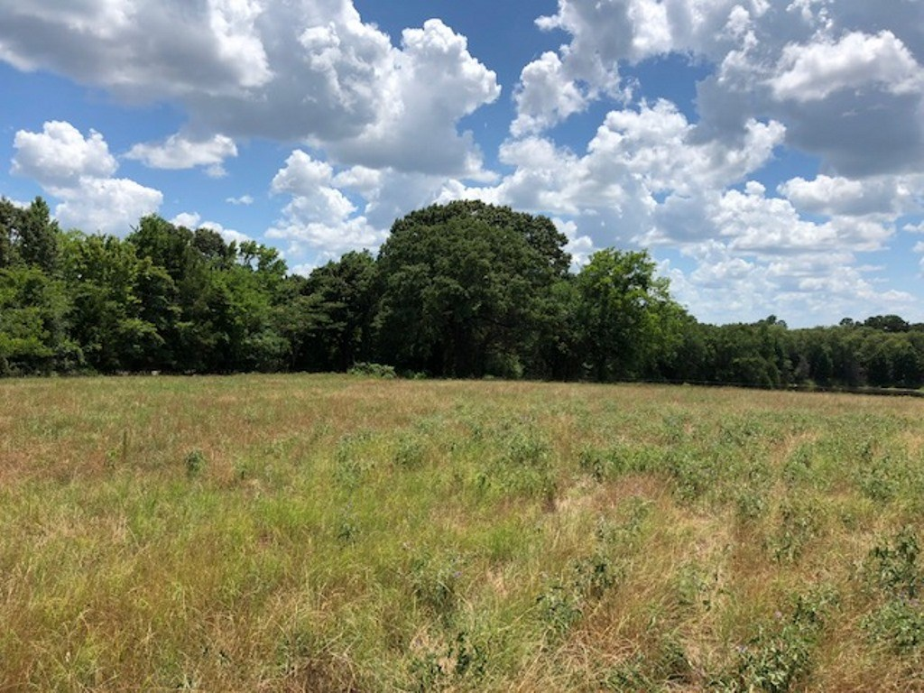 BEAUTIFUL 13 ACRE HOME SITE FOR SALE IN EDOM, TX.