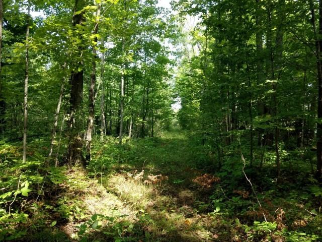 Northern MI Acreage for sale - 66 Acres near Hillman MI