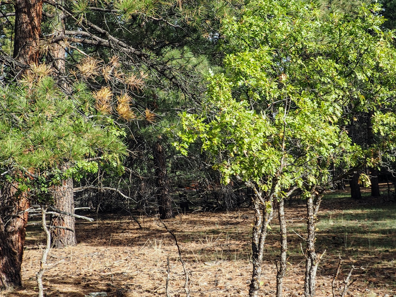 Land for Sale at the base of the Brazos Cliffs S. Chama NM