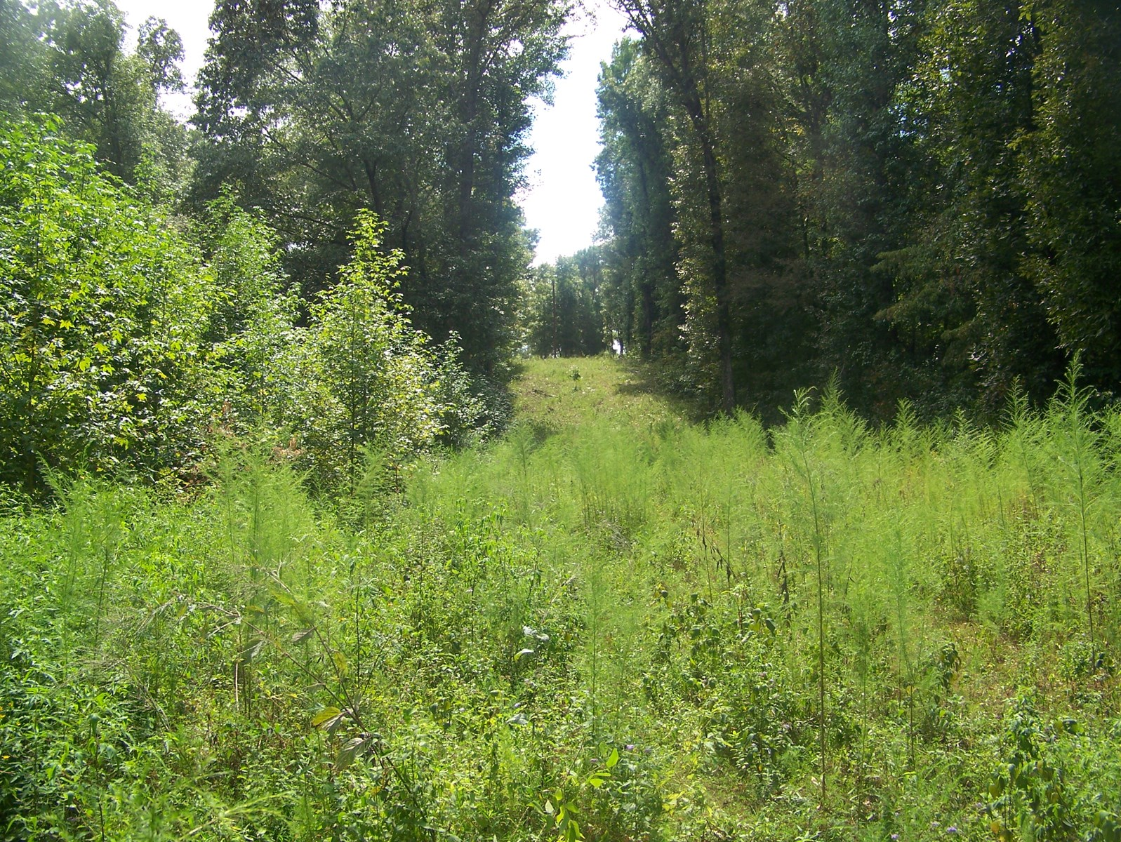 HUNTING LAND FOR SALE IN TN, NO RESTRICTIONS, NEAR WHITE OAK