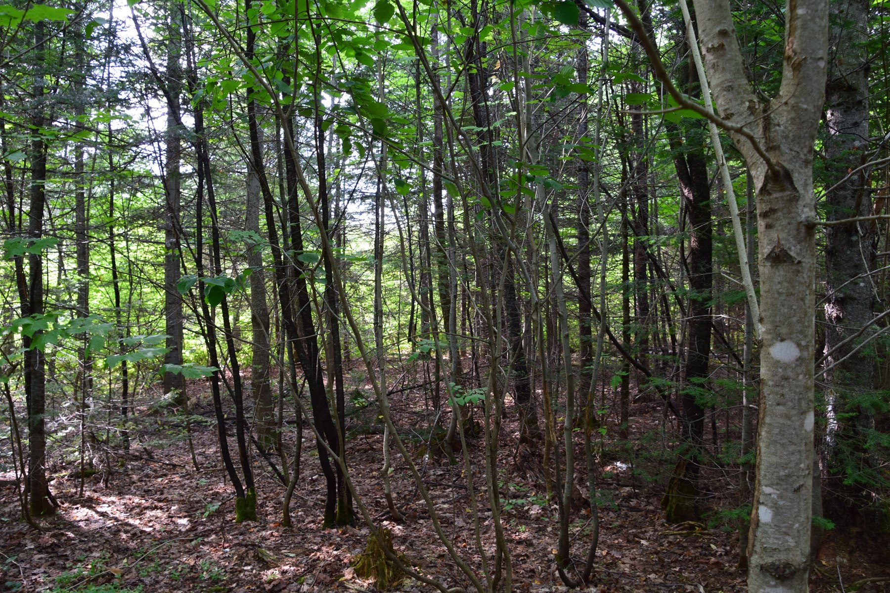 Timberland Lot For Sale In Mount Chase, Maine