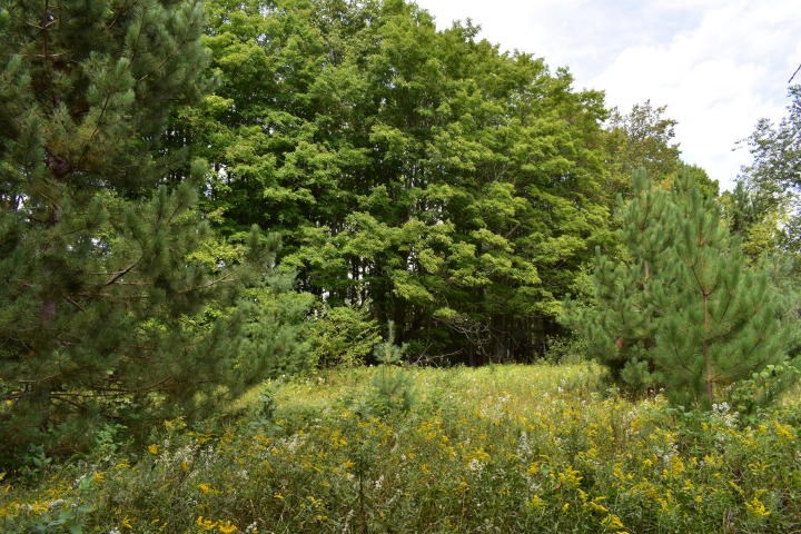 Northern MI Hunting Property for Sale Atlanta MI