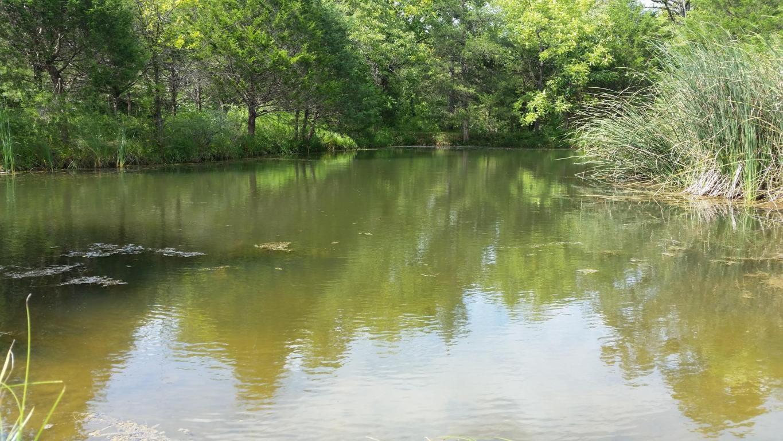 For Sale Cabin/Workshop w/ Spring Fed Pond & Bldg Sites