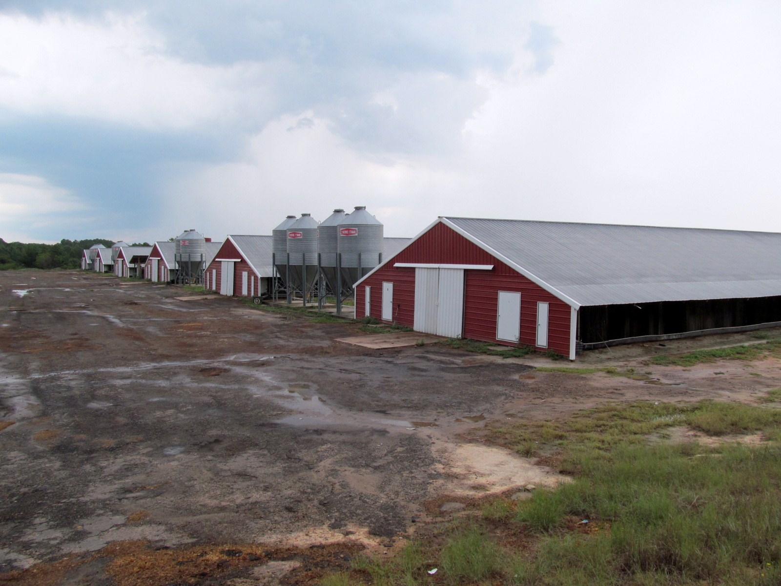 EAST TEXAS POULTRY FARM FOR SALE - WOOD COUNTY -  18 ACRES