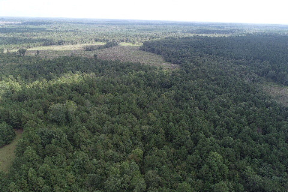 Large Recreational Timberland Hunting Camp Site For Sale