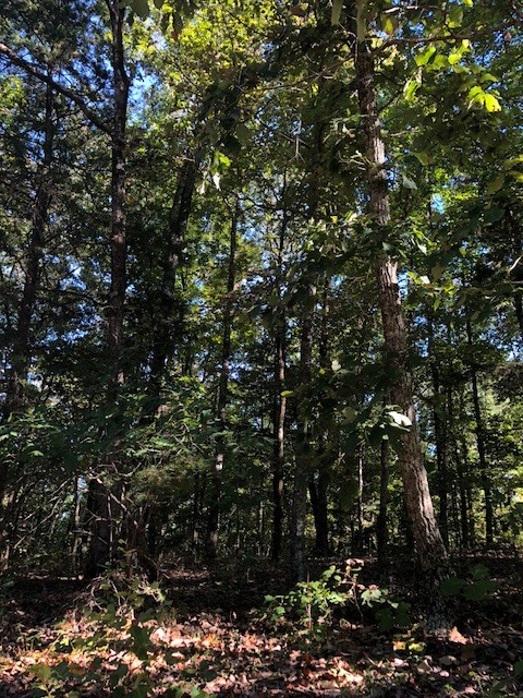 1 Acre Wooded Land Suitable For Off The Grid Building Site