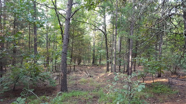 72.5 Acre Recreational Property in Sans Bois Mountains