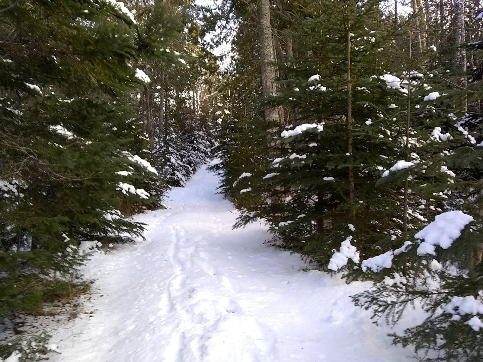 Coastal Land w/ Deeded Beach Access For Sale | Lubec, Maine