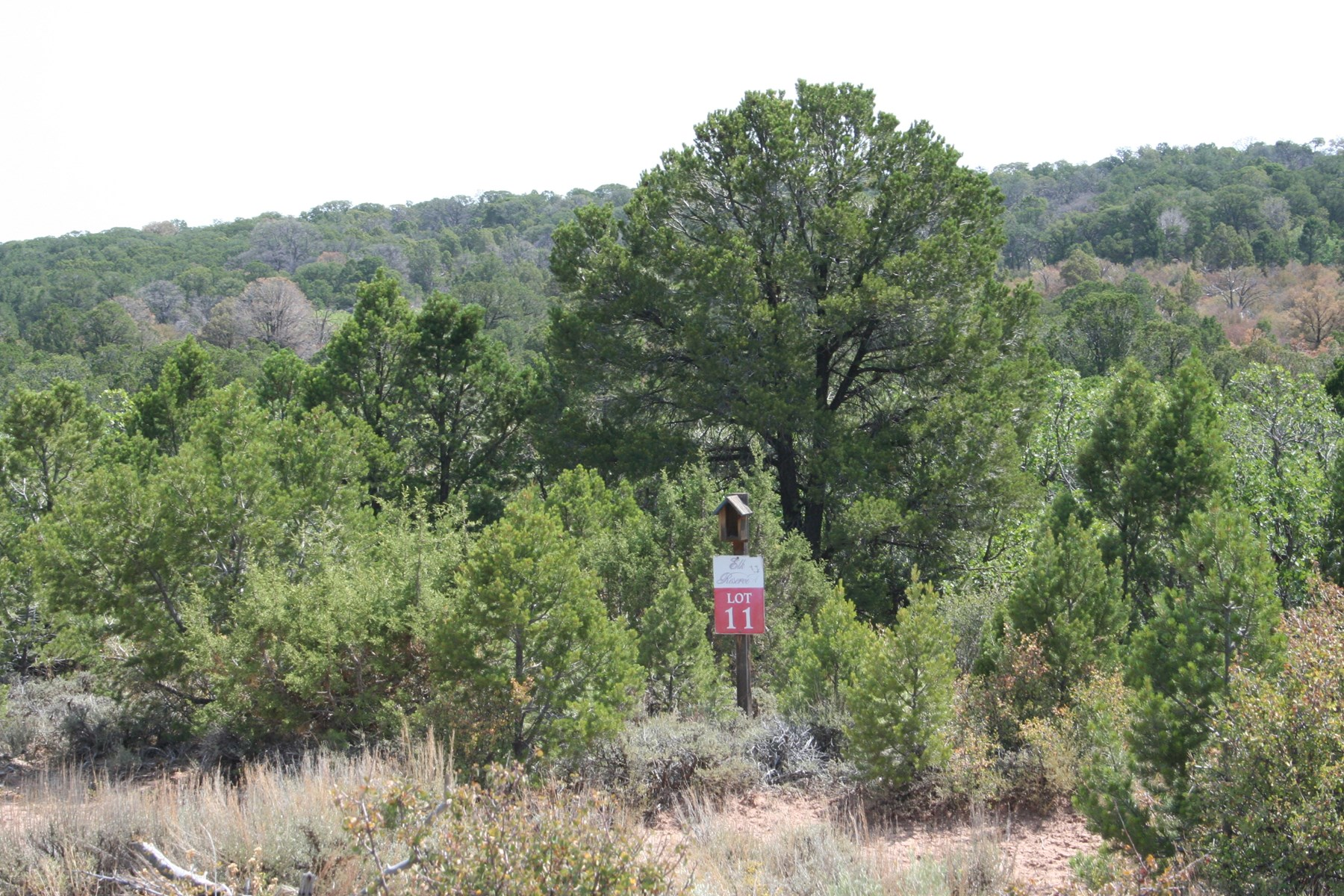 38 acre Mountain Homesite for sale near Grand Junction, CO