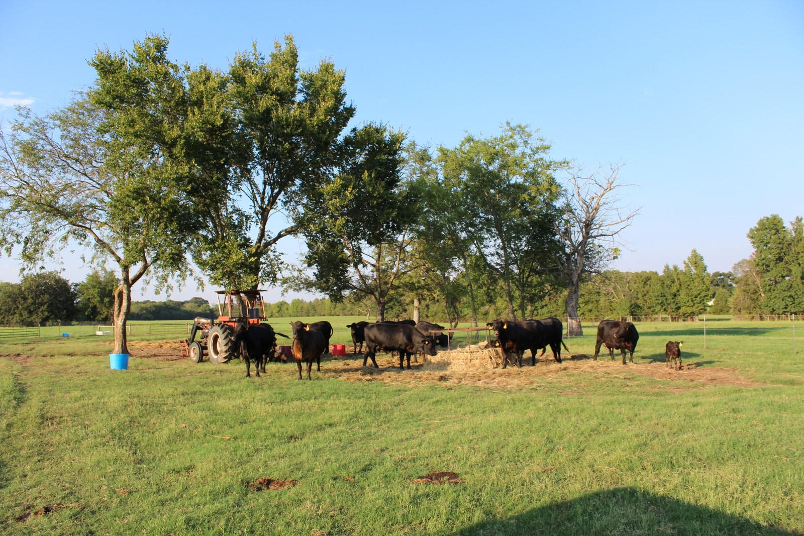 80 EAST TEXAS ACRES - WORKING CATTLE RANCH WOOD COUNTY TEXAS