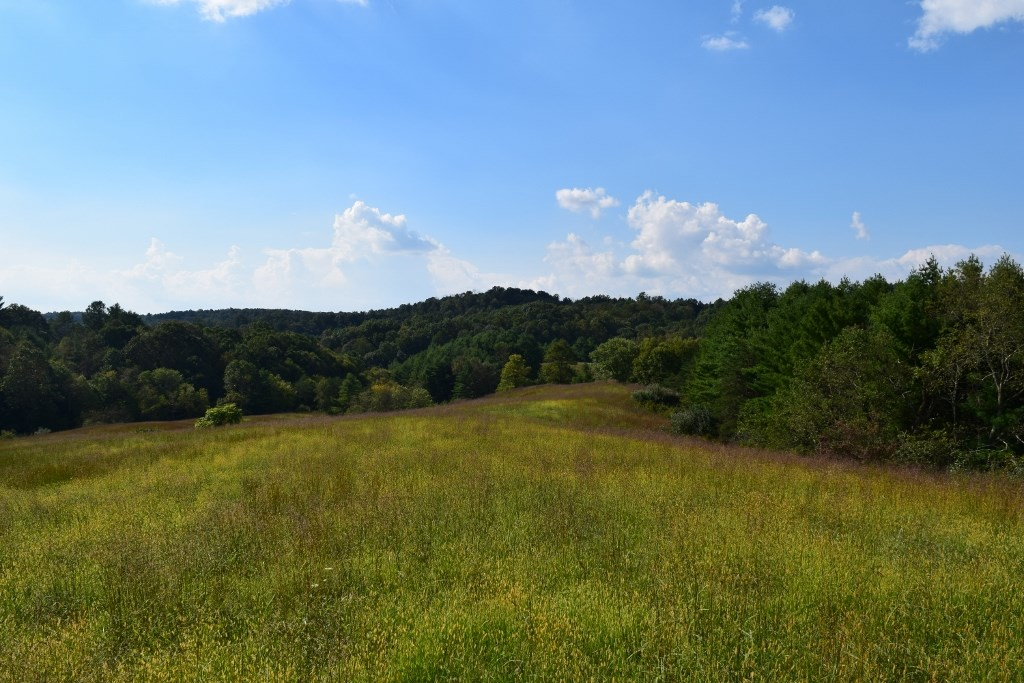 Land Auction of Farm Land in Floyd VA