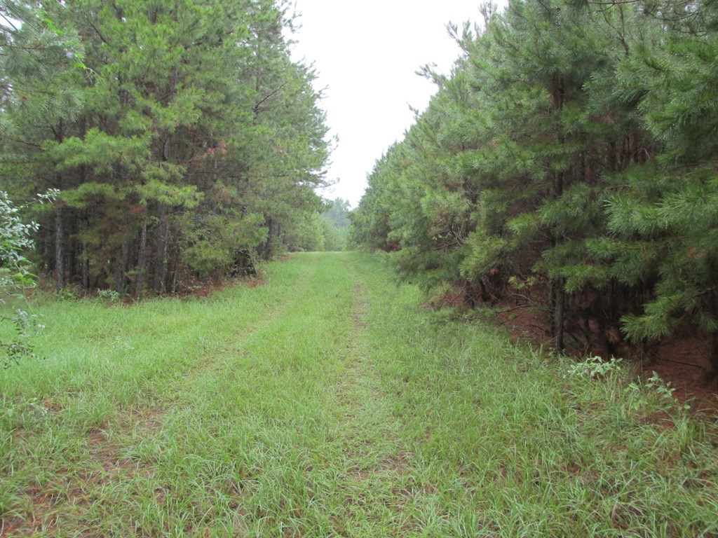 RURAL UNDEVELOPED ACREAGE FOR SALE  IN PALESTINE TEXAS