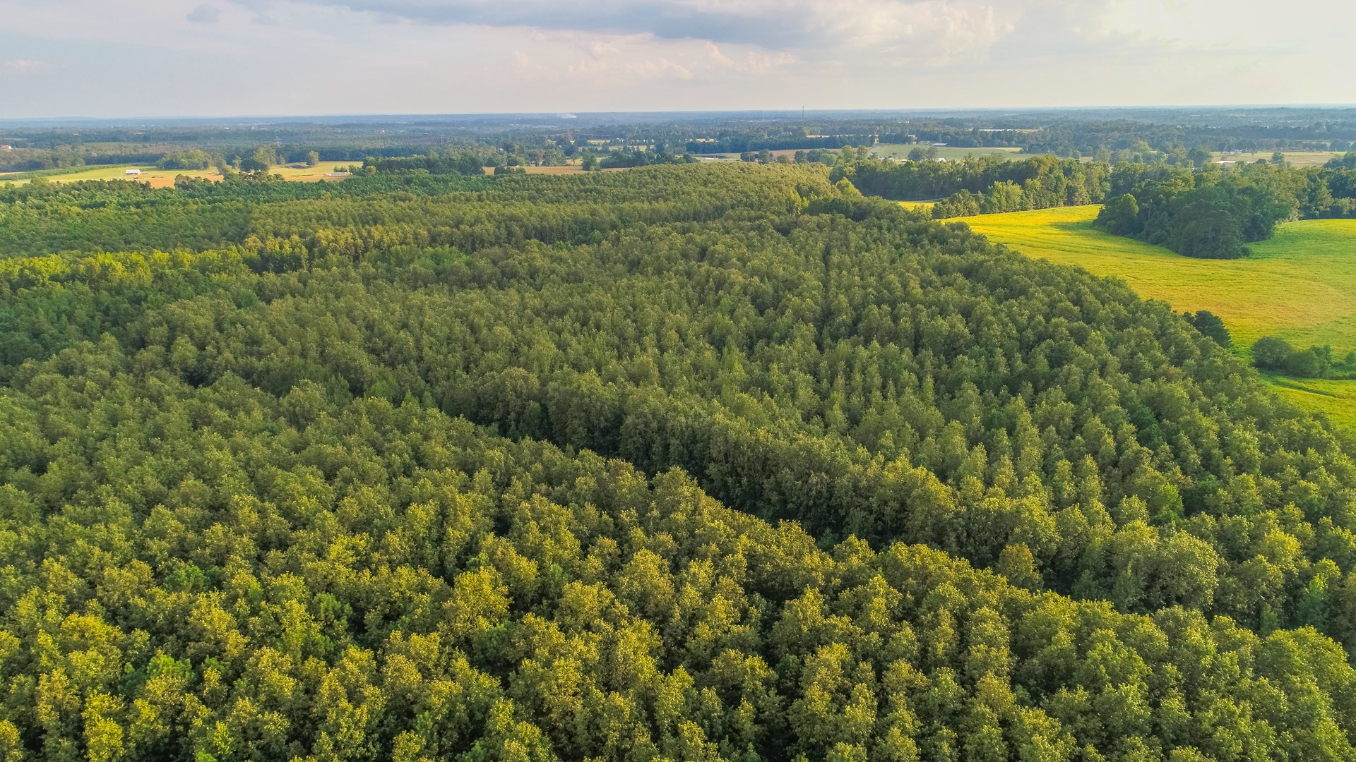 Live Timberland Auction  12 Tracts  of  403 Acres