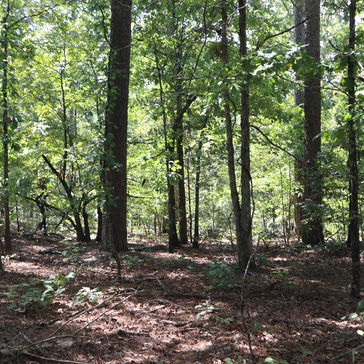 Ozarks Private Hunting Property with Cabin for Sale