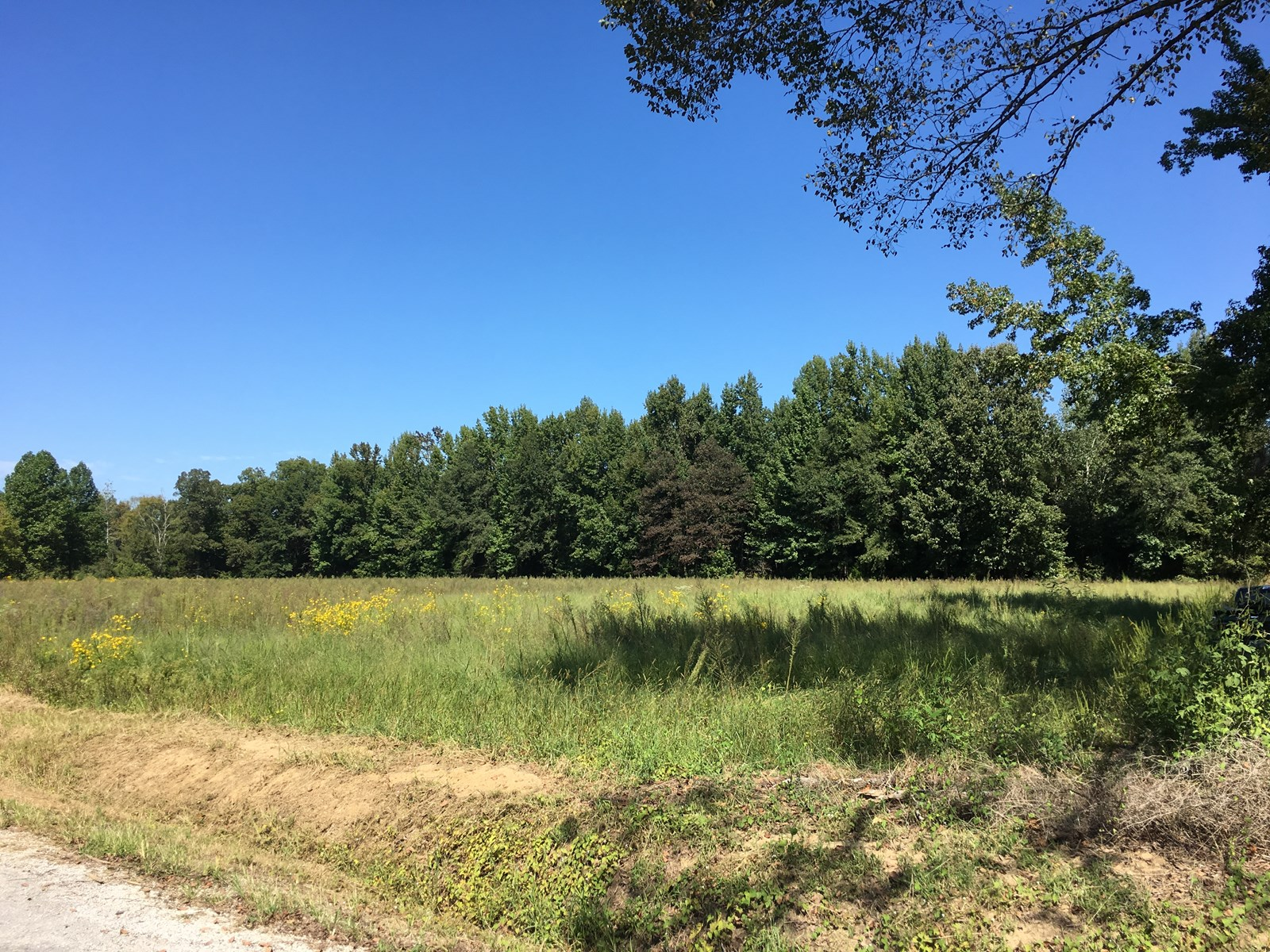 125 Acres for Sale in Calhoun County, MS