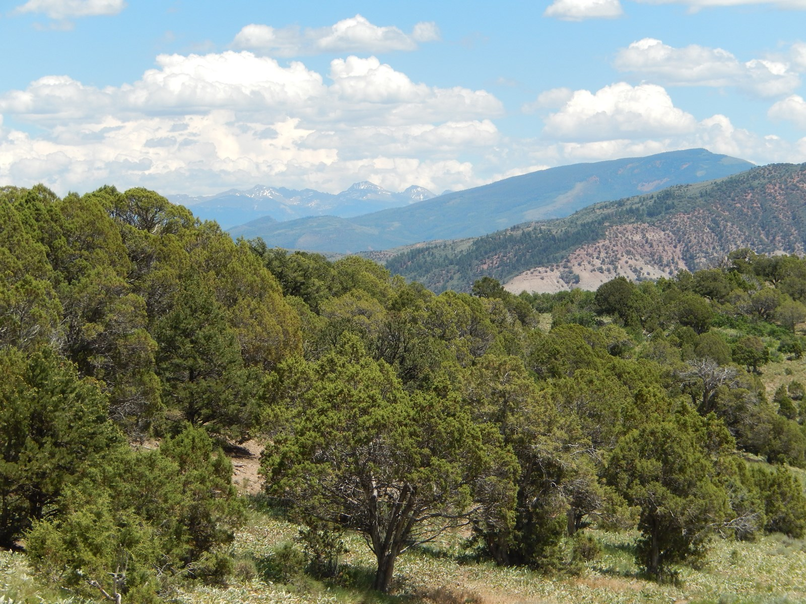 41 Acres Eagle County  Surrounded by BLM Coffee Pot Road