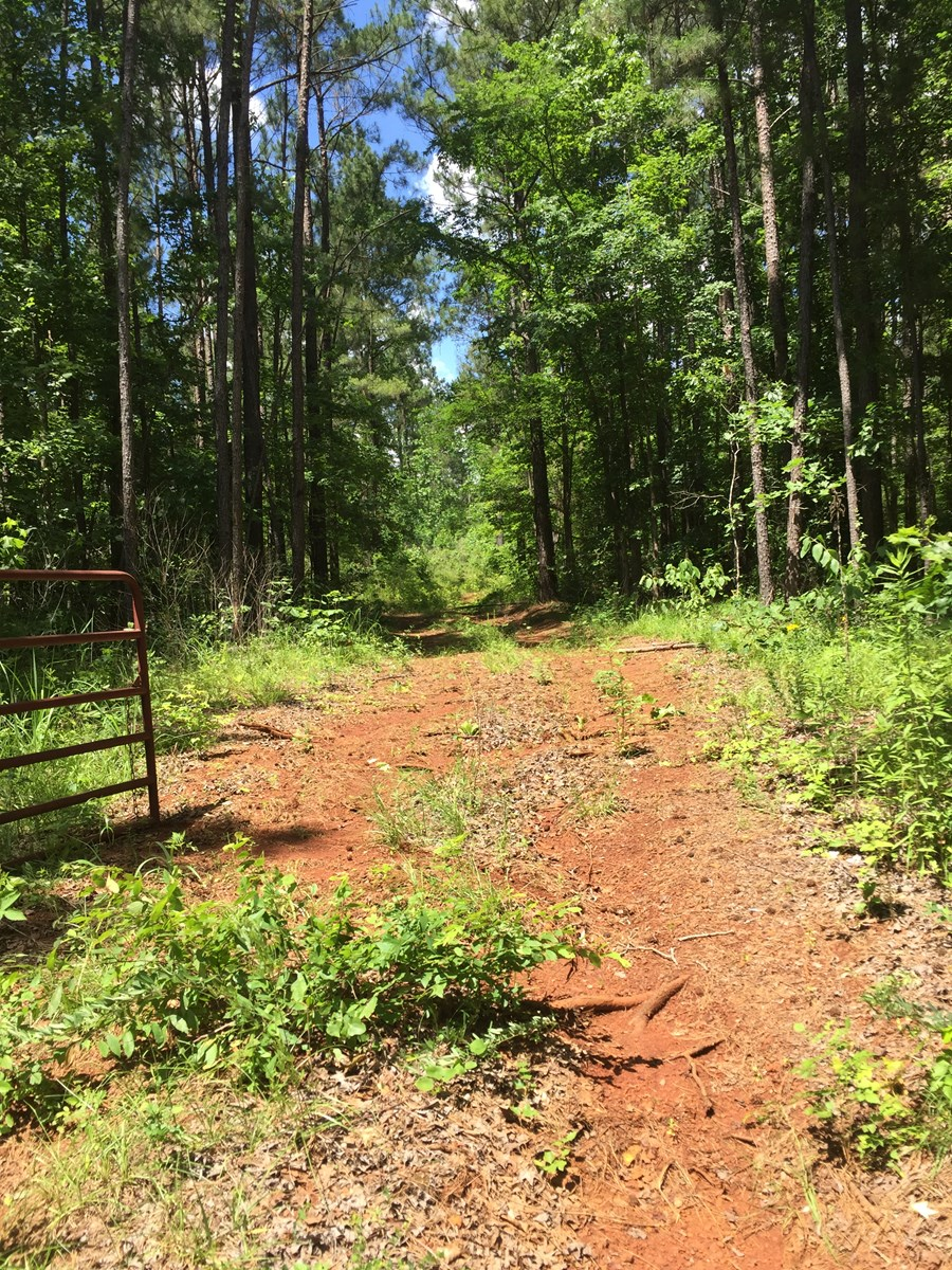 East Texas Hunting Land, Recreation, Timber