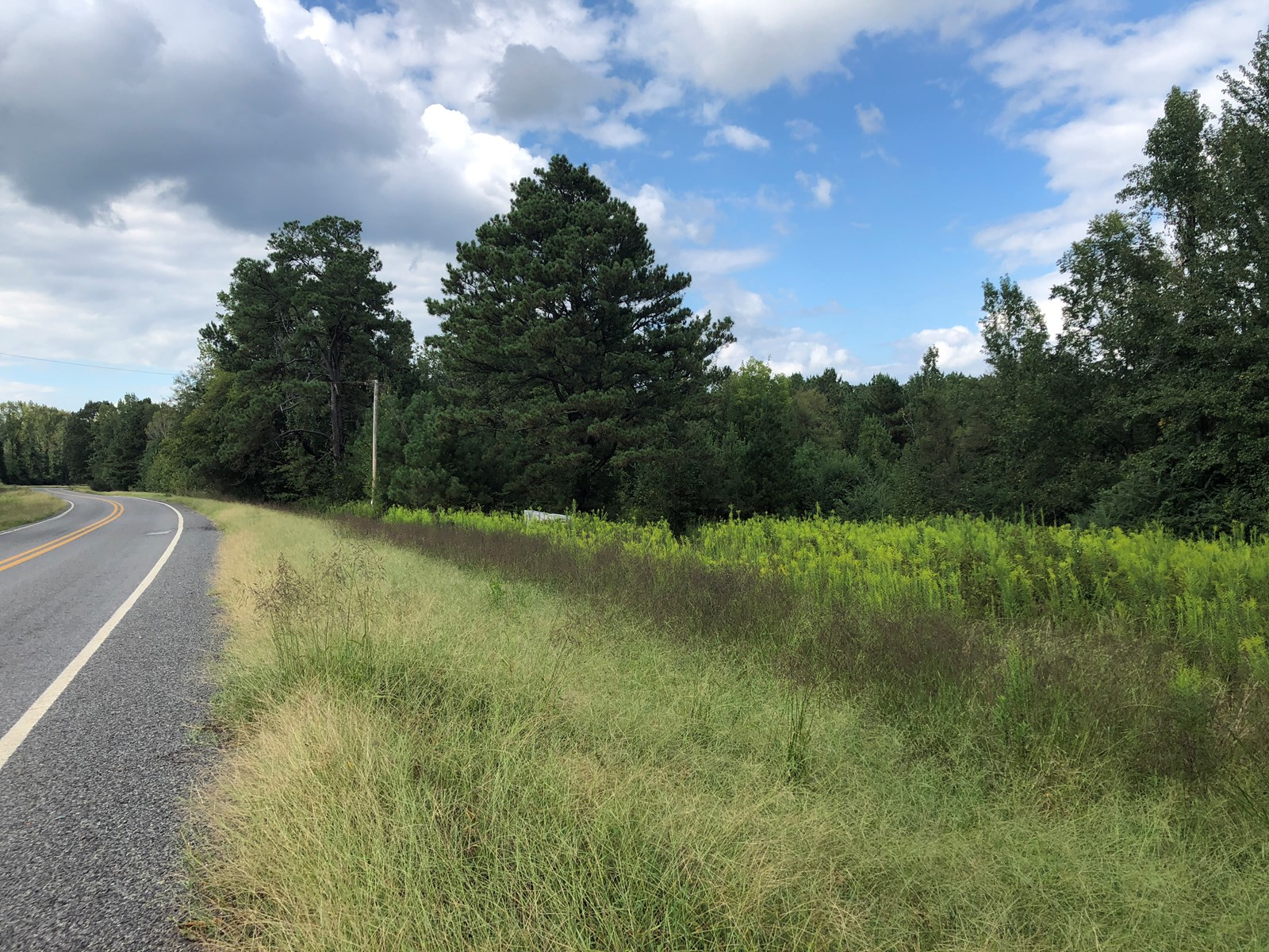 Timberland with Home Site Potential For Sale Near Gurdon, AR