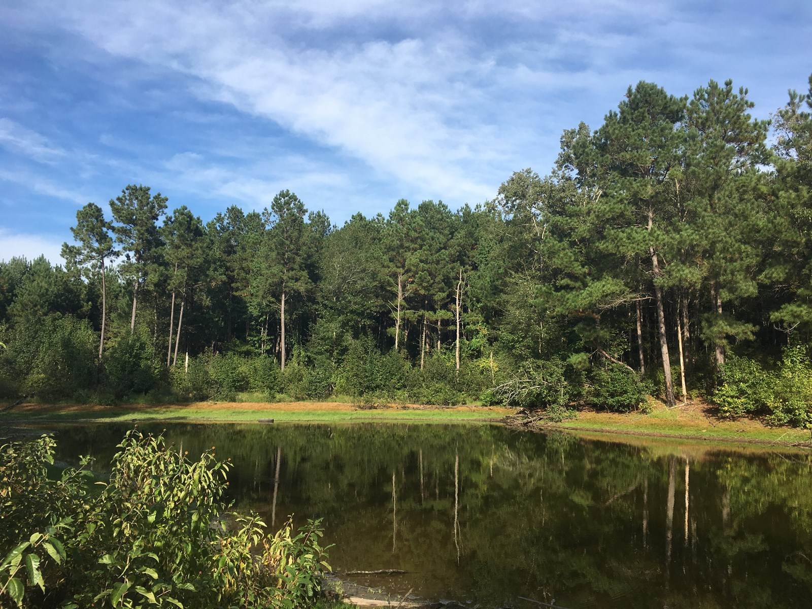 Large Pine Land Property with Camp for Sale near Reader, AR