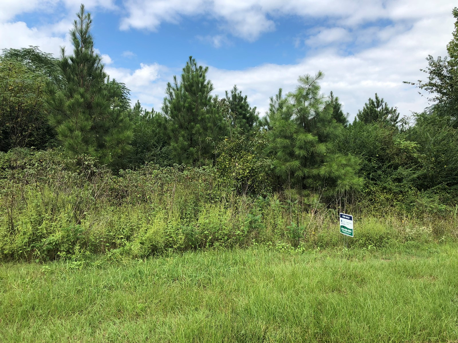 Young Planted Pine with Hardwood for Sale Near Prescott, AR