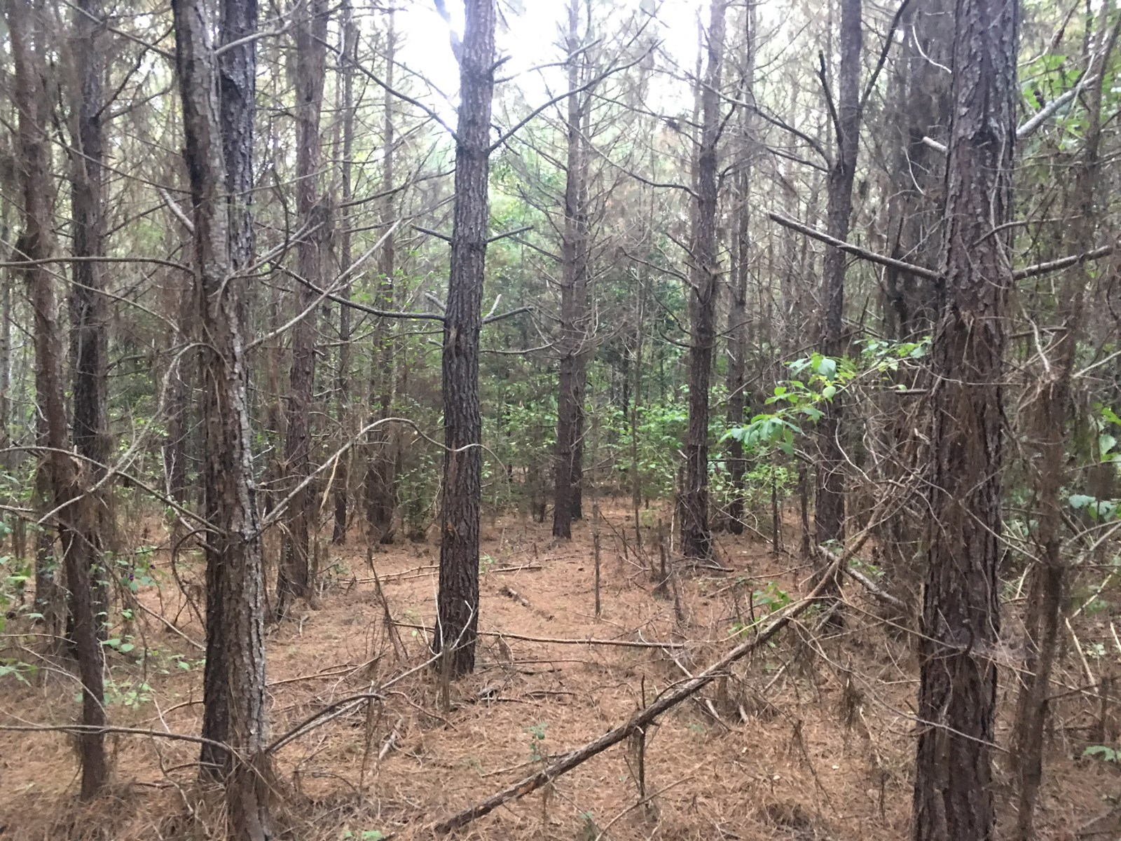 Ouachita County Planted Pine Land near State Park for Sale