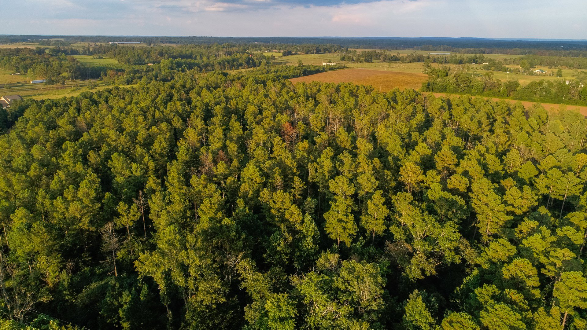Live Timberland Auction- 403 +/- Acres # 2 of 12 Tracts