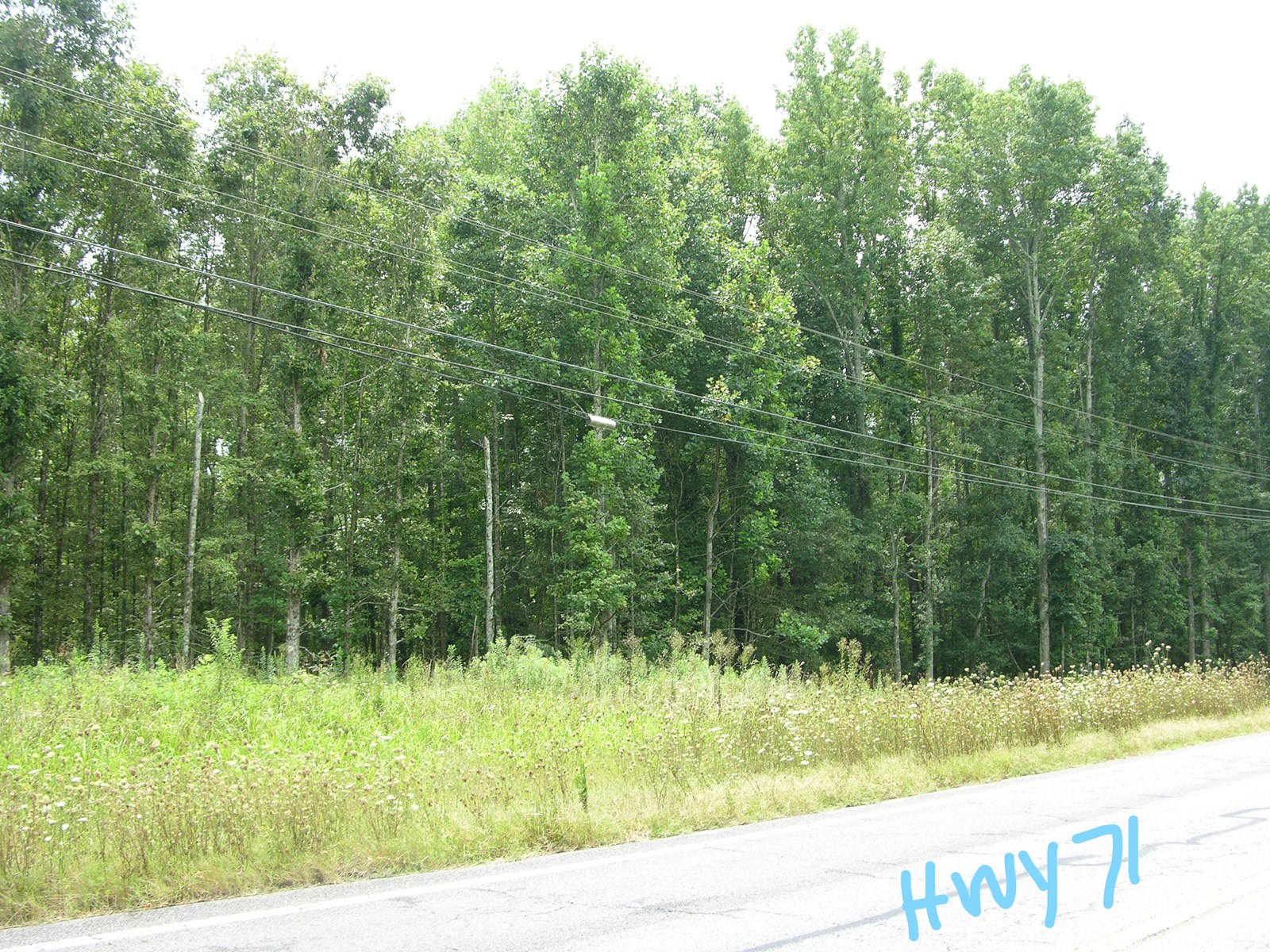Timberland Auction Tract 5  67 5  Acres