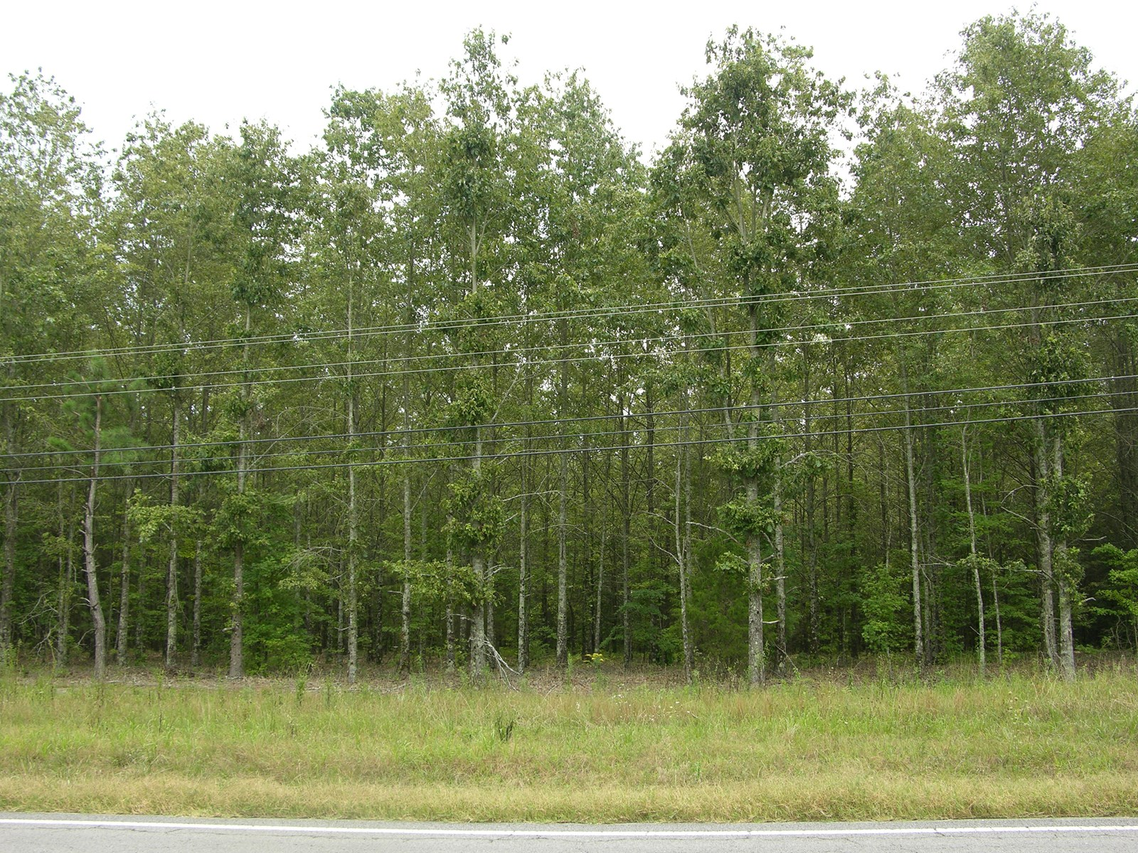 Land Auction Tract  6   9 6 Acres