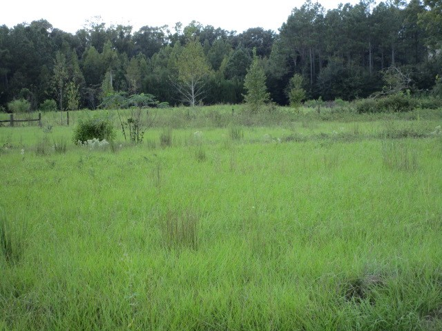 Lot in Bristol FL for sale, cleared and level.