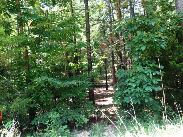 21.1 Acres of Wooded Land For Sale Near Mountain View