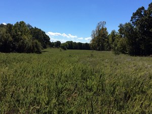 385 ACRES FOR HUNTING
