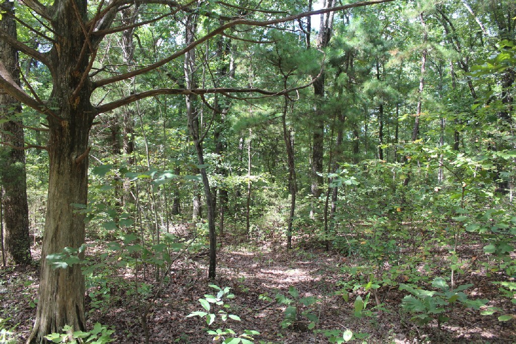 Building Lot For Sale 20 Minutes From Mountain View AR