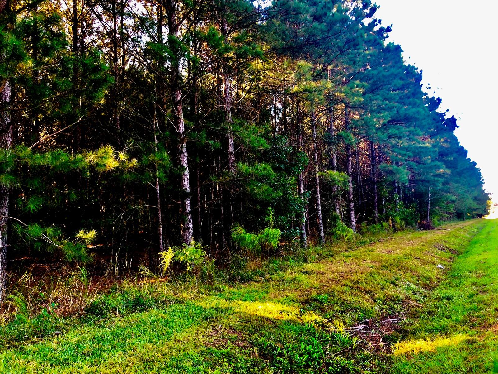 Timberland For Sale Washington NC, Recreational property