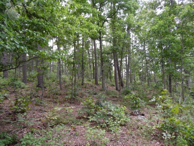 40 Ozarks Wooded Acres For Sale
