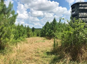 420 ACRES SOUTH MS HUNTING LAND FOR SALE FRANKLIN COUNTY, MS