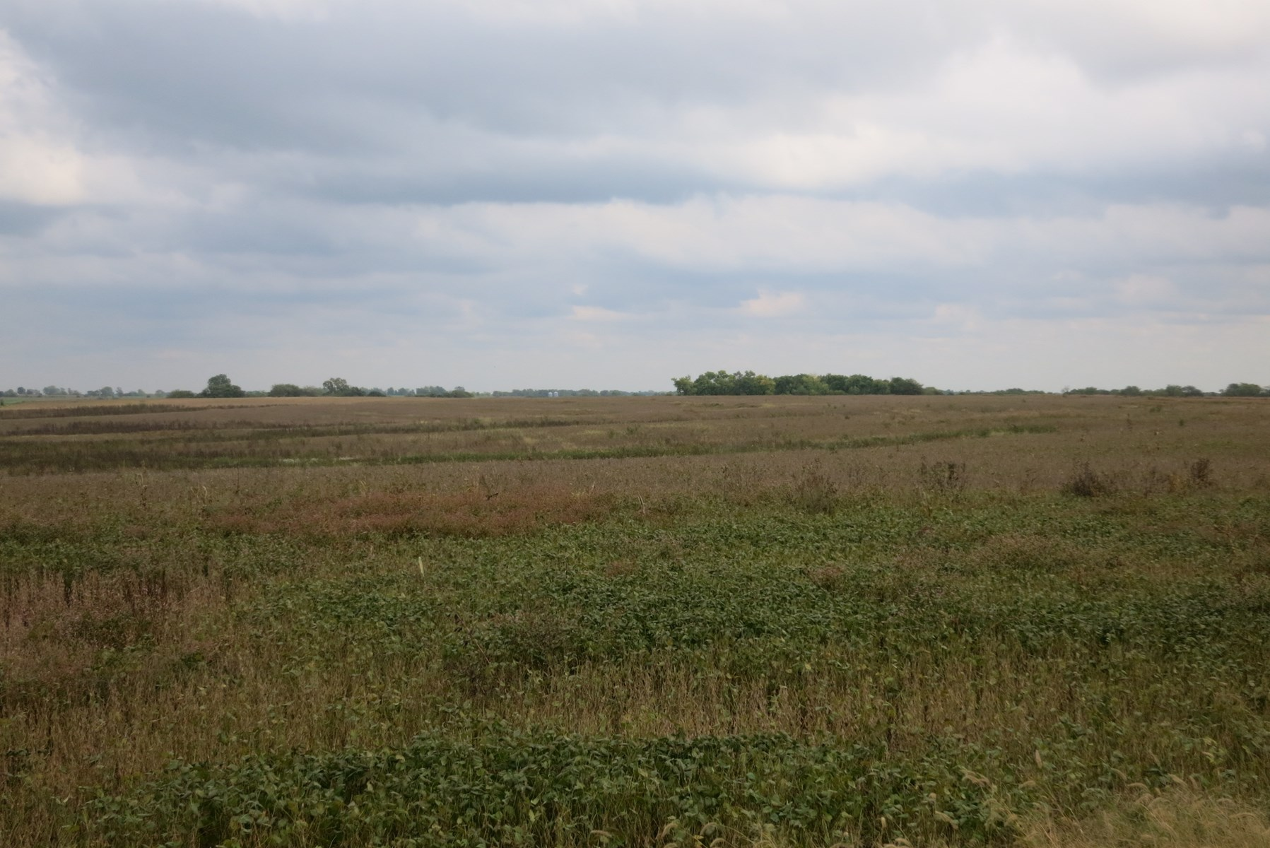 For Sale 199 Acres in Northern Harrison County