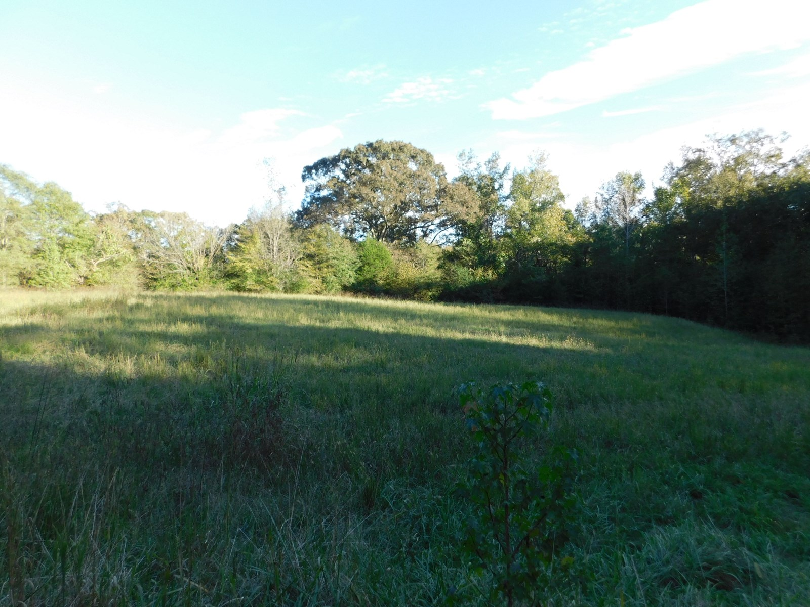 FARM FOR SALE IN TN FENCING, TIMBER, HORSES, CATTLE, HUNTING