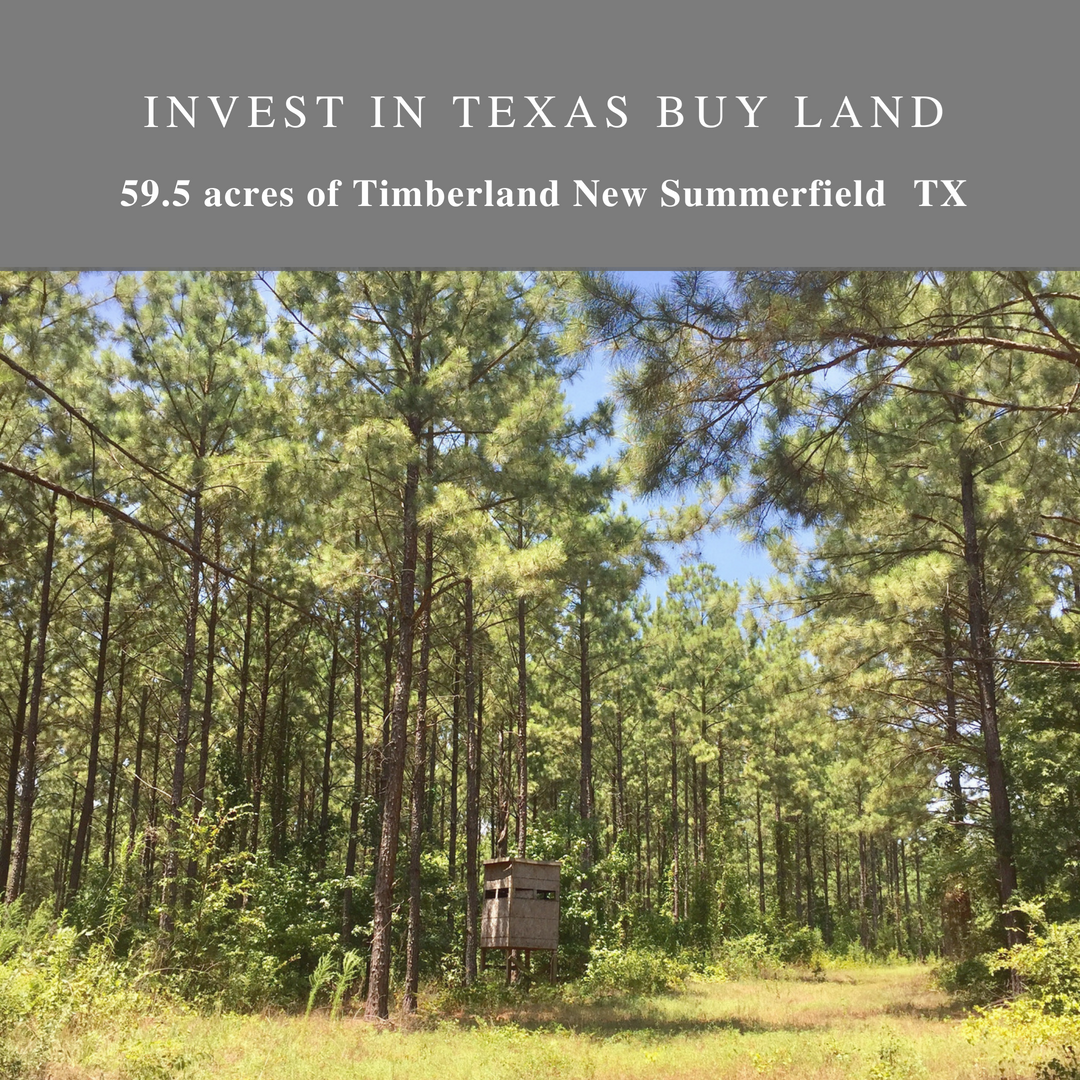 EAST TEXAS TIMBERLAND FOR SALE CHEROKEE COUNTY TEXAS