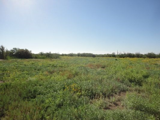 Land Investment Near Fort Stockton, TX on Hwy 1053 781 Acres