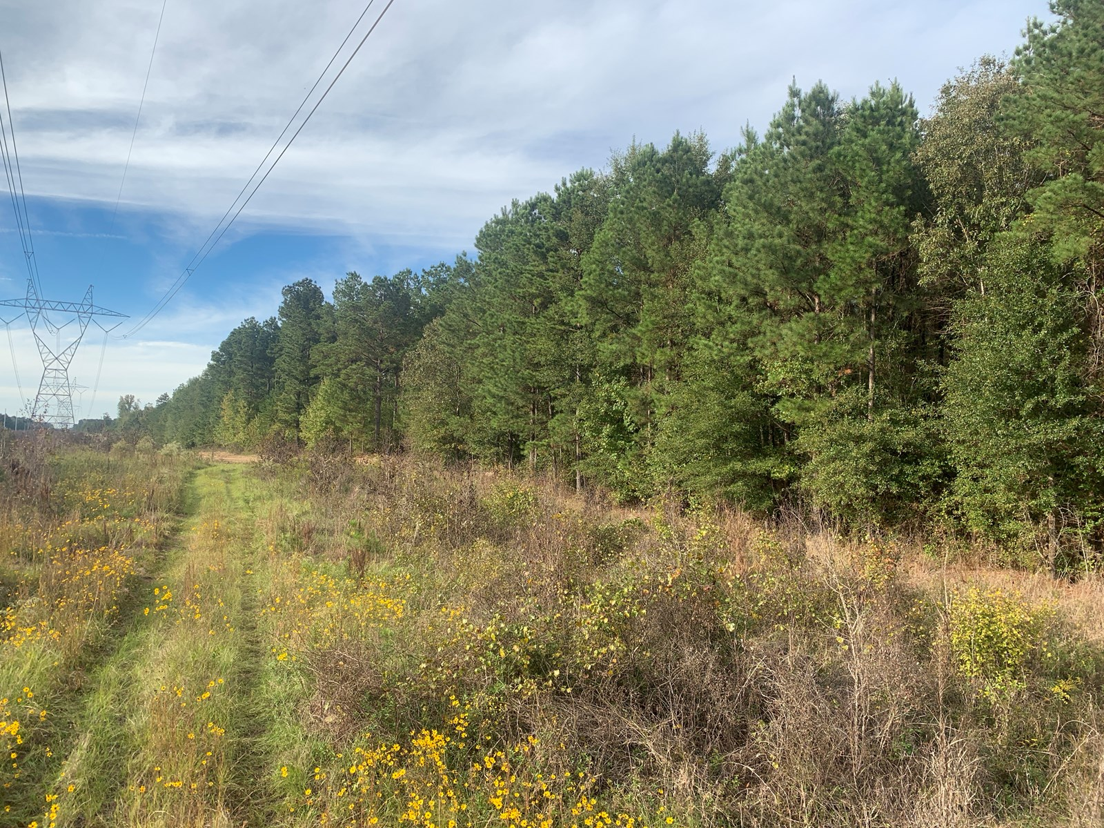 Pine Timberland Hunting Land for Sale in Union County, AR