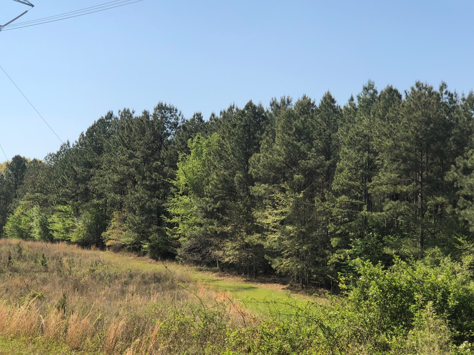 Pine Timber Hunting Land for Sale in Union County, Arkansas