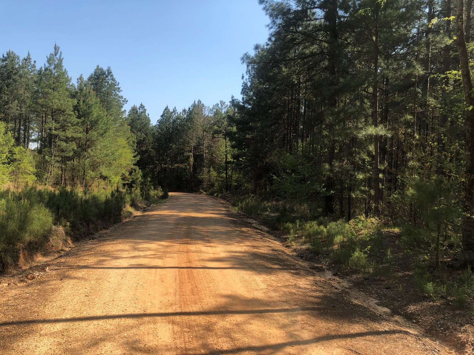 Investment Pine Timberland for Sale in Southern Arkansas